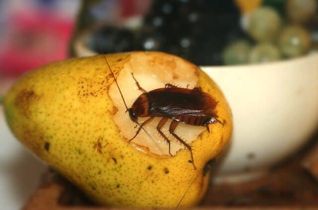 Evinizdeki Küçük Misafirler, Böcek İstilası