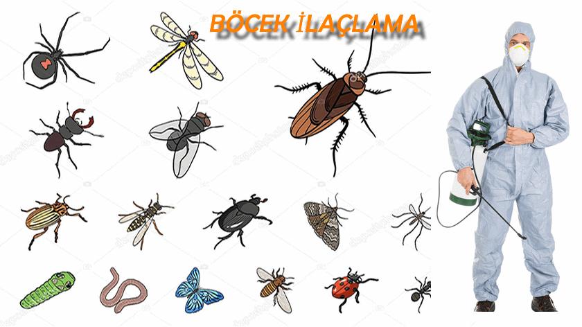 Böcek İlaçlama Önemi
