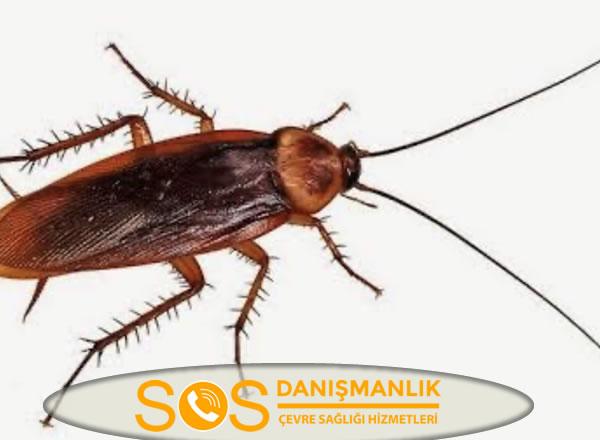 Adalar Böcek İlaçlama