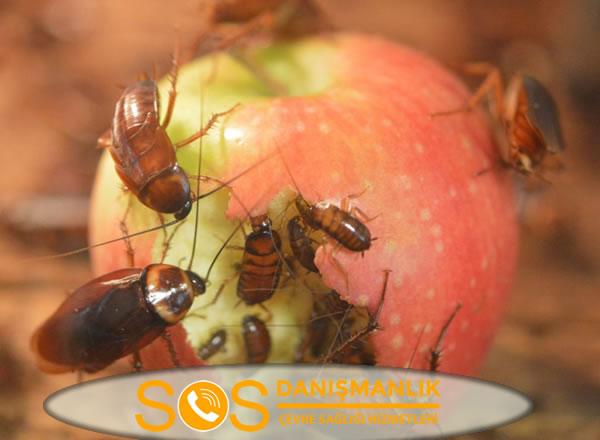 Böcek İlaçlama İstanbul – Garantili ve Kalıcı Böcek İlaçlama