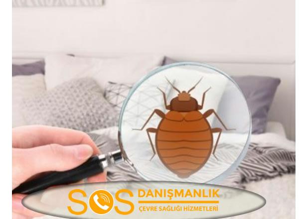 Başakşehir Böcek İlaçlama Nasıl Yapılır?