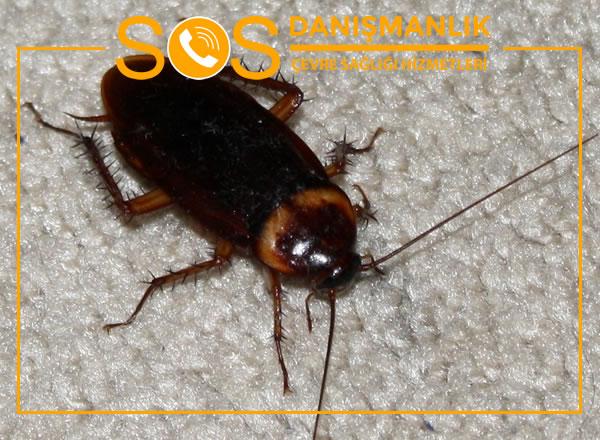 Beylikdüzü Böcek İlaçlama