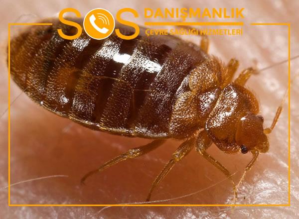 Çekmeköy Böcek İlaçlama