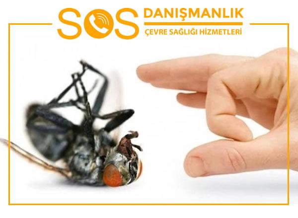 Kağıthane Böcek İlaçlama