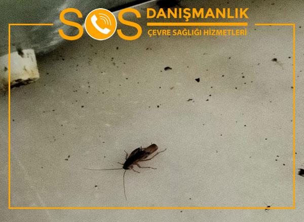 Kandıra Böcek İlaçlama