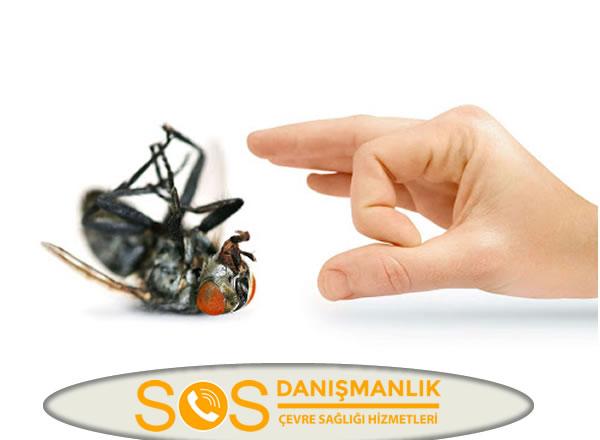 Kocaeli Böcek İlaçlama
