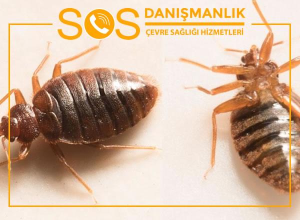 Pendik Böcek İlaçlama