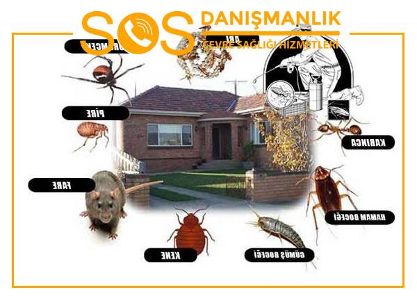 Zeytinburnu Böcek İlaçlama