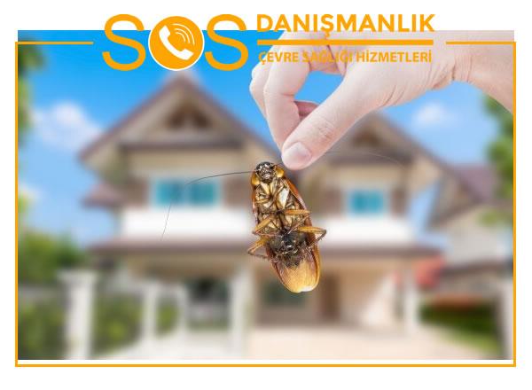 Böcek İlaçlama Şirketleri – Böcek İlaçlama Şirketleri Ne Yapar?