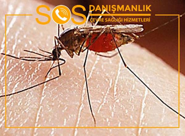 İstanbul Sivrisinek İlaçlama