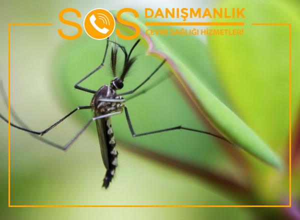 İstanbul Sivrisinek İlaçlama – Garantili İlaçlama Hizmetleri