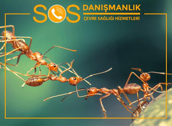 Karınca İlaçlama – En Etkili Karınca İlaçlama Yöntemi Nedir?